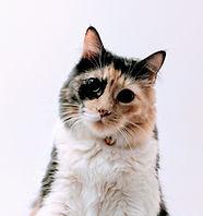 Multi-gekleurde Cat