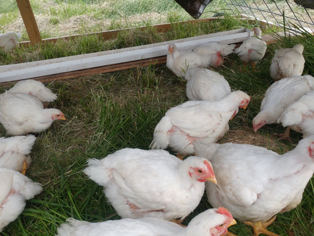 Why is Pastured Poultry so GOOD??