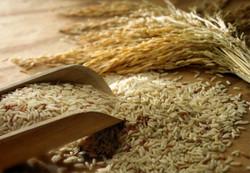 Масло риса