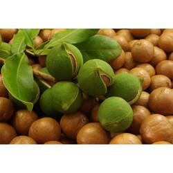 Масло ореха макадамия