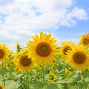 令和元年の夏季休業のお知らせ