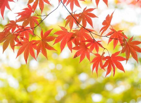 11/5(火)12(火)午前・臨時休業のお知らせ