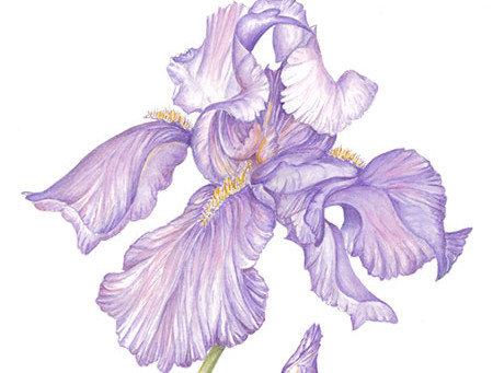 Botanical Art In Bloom