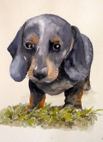 Dudley Dog