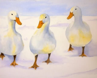 Ducks In Snow