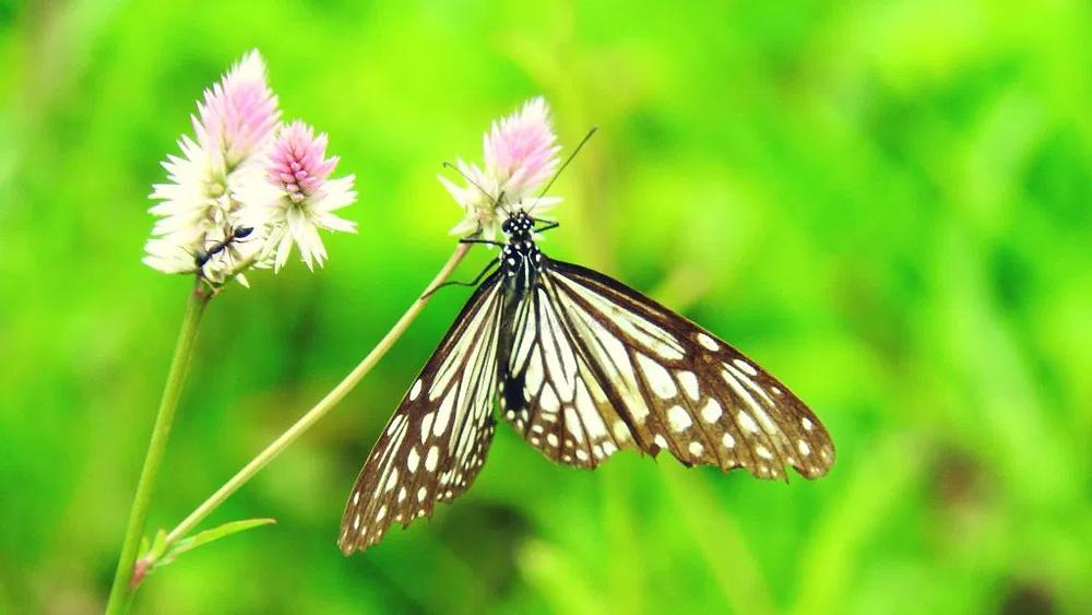butterfly, flower, wildflower