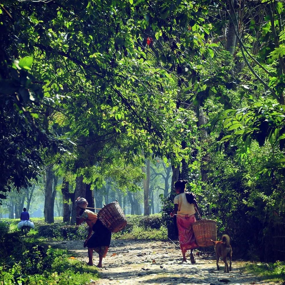 Assam, Manas National Park, northeast India,