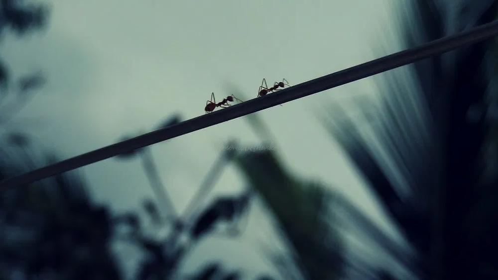 two ants walking