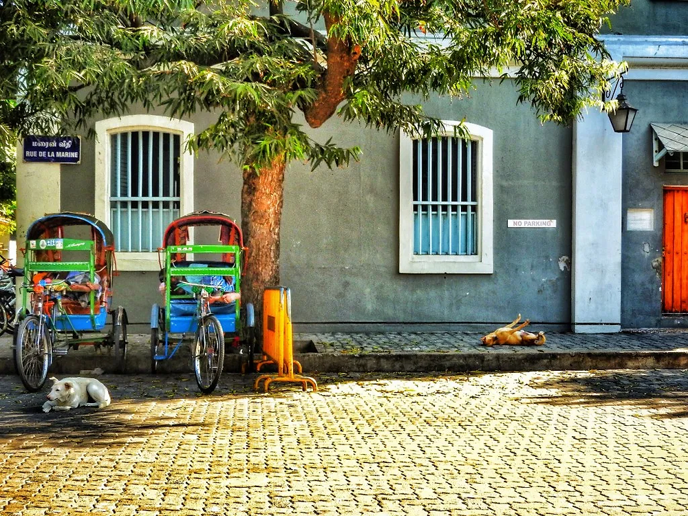 stray dogs, streets of India, Pondicherry, French Quarter