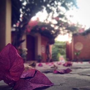 bouginvillea, flower, blur,