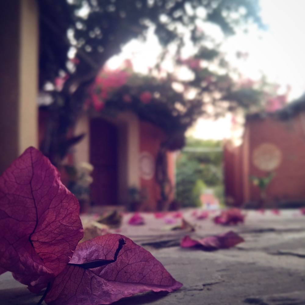 bougainvillea fallen on the floor