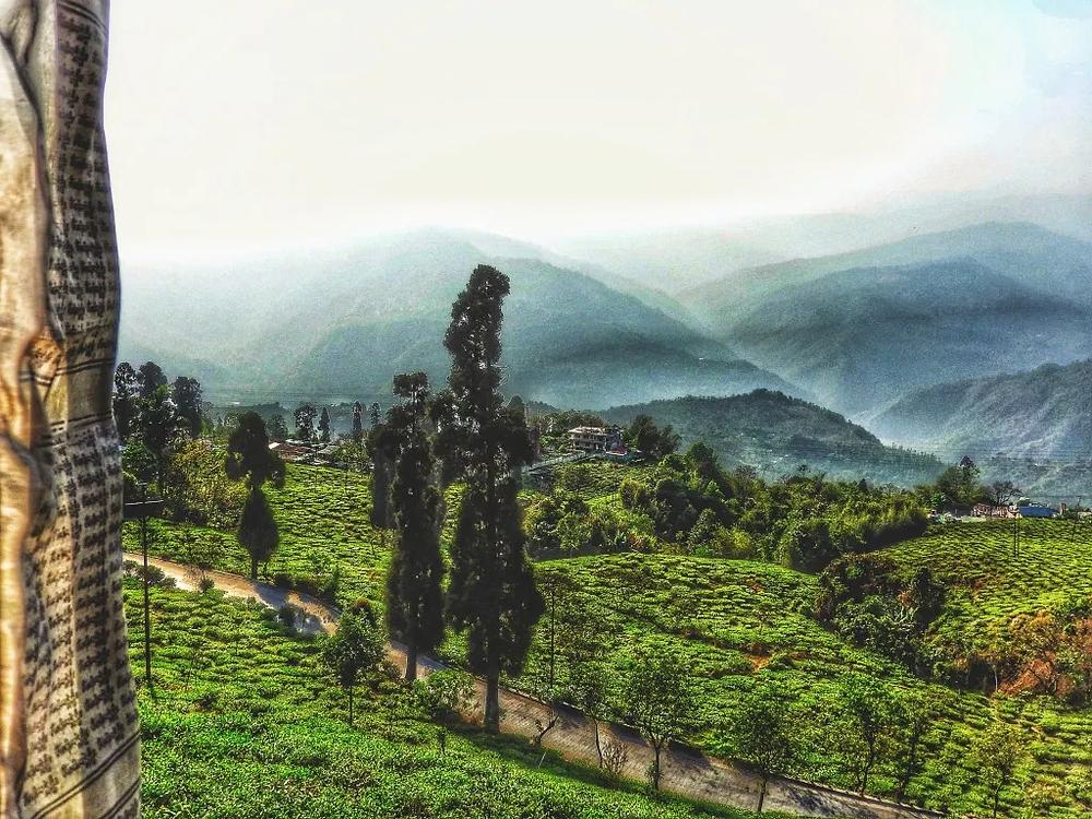prayer flag, hills, tea gardens, Kurseong, West Bengal