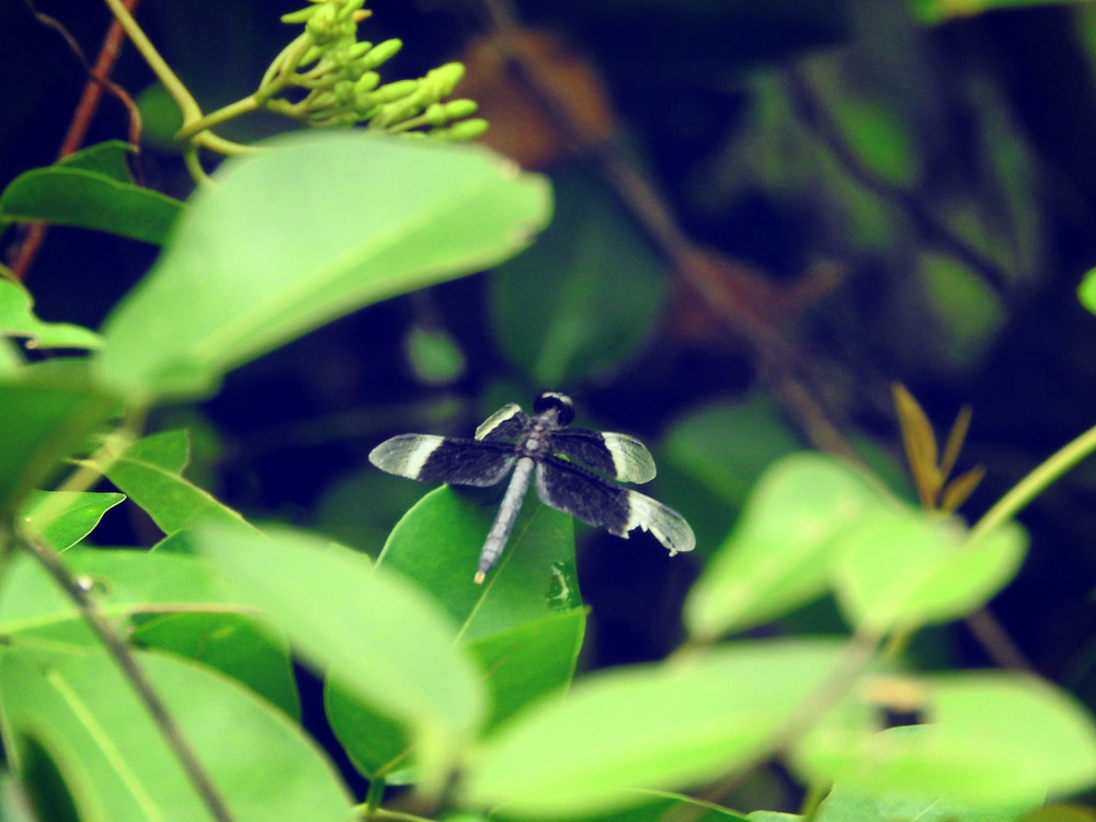 dragonfly with broken wing in green leaves