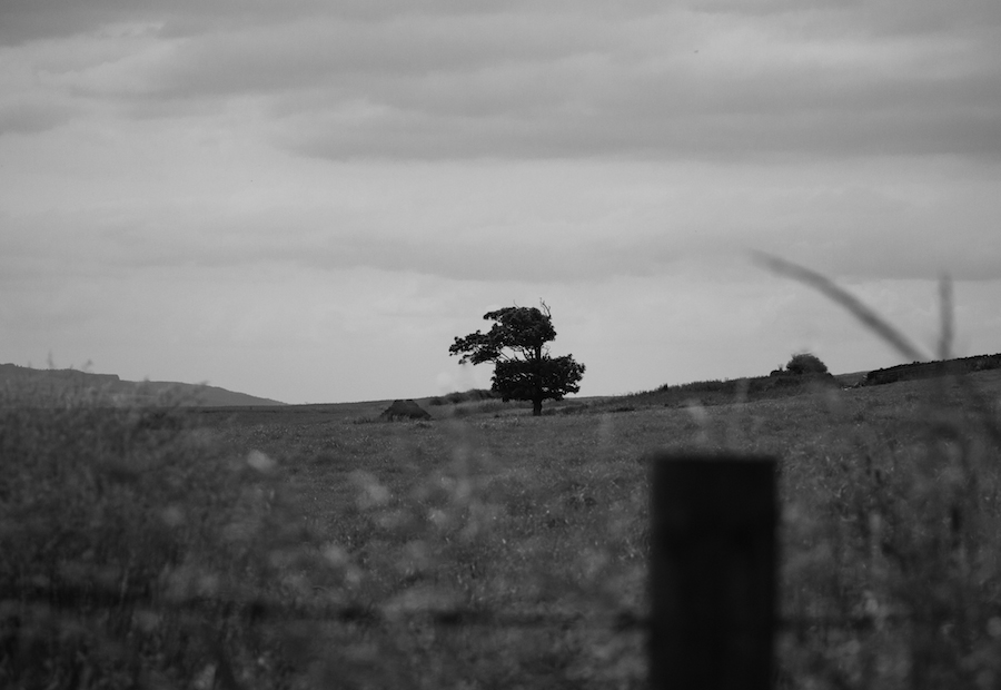Hanging Tree B&W