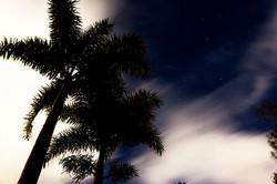 Midnight Palms