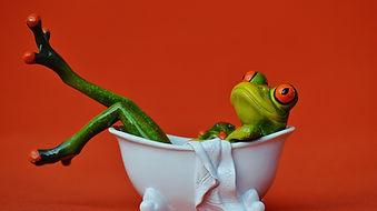 frog-1248936_960_720.jpg