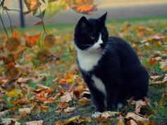 Kuldiga_Autumn_15.jpg