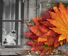 Kuldiga_Autumn_10.jpg