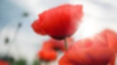 PoppyWS1.jpg