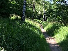 MTB Trail Czech Republic - Jizera Mounta