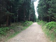 Cycling in Europe - Jizera Mountains - J