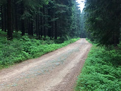 Bycicle tour - Jizera Mountains - gravel