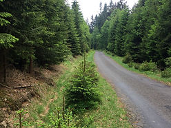 Jizera Mountains holidays - cycling path