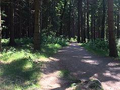 Best MTB trails Jizera Mountains - singl