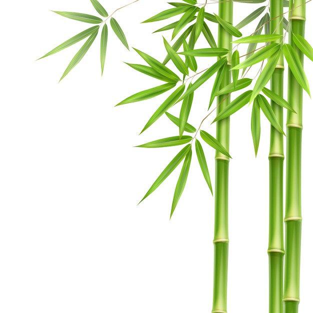 tiges-feuilles-bambou-vert-vecteur-isole