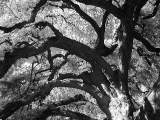 More Infrared from the Rancho Santa Fe Botanical Gardens.