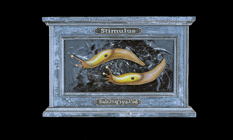 Stimulus (Saliʔ=q'iyáƛ'əd)