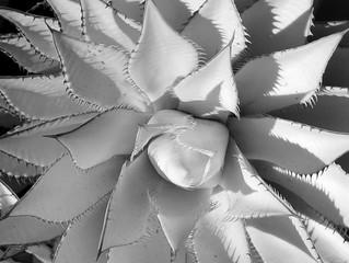 Claremont Botanical Gardens Infrared
