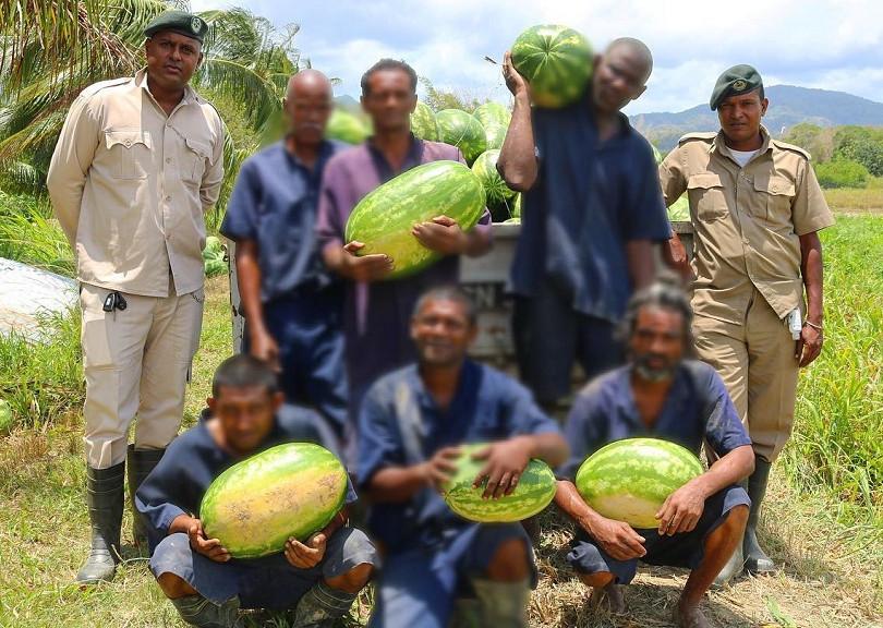 Agriculture GGP.jpg