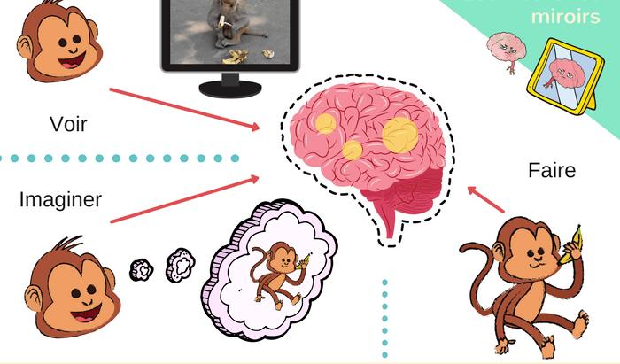 Neurones miroirs et empathie