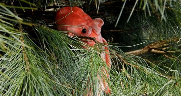 A fake image of an octopus hiding among the needles of a pine tree.