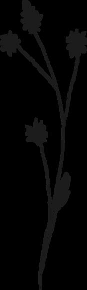 wildflower3.png