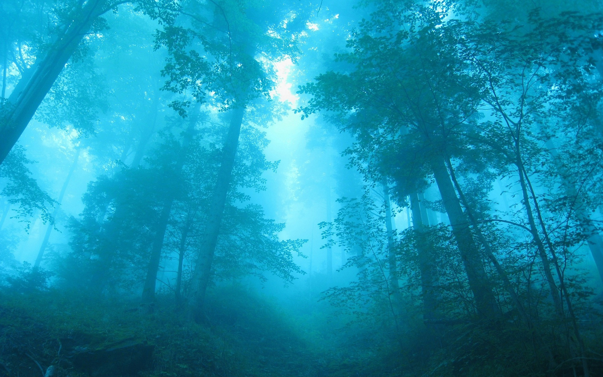 blue_forest_hd_widescreen_wallpapers_1920x1200