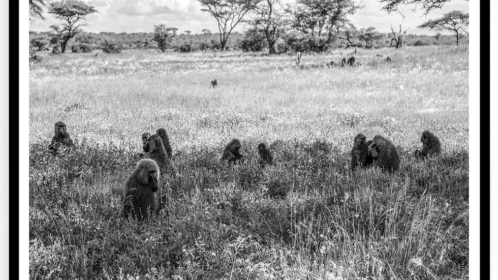 Monkeys, Africa, 2018. Fine Art Print. 60 x 80 cm. Edition 10.