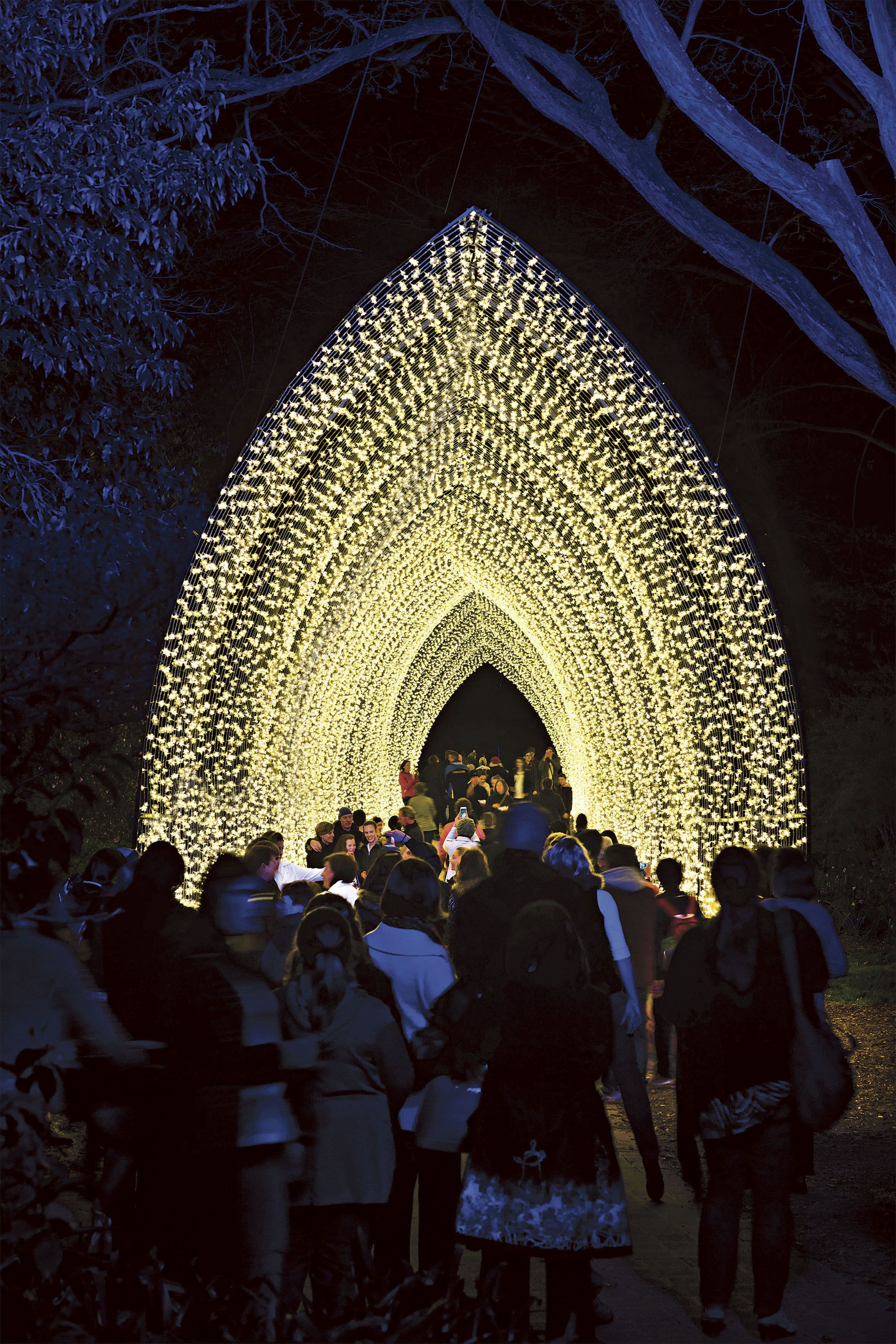 vivid-sydney-cathedral-of-light-royal-botanic-gard11