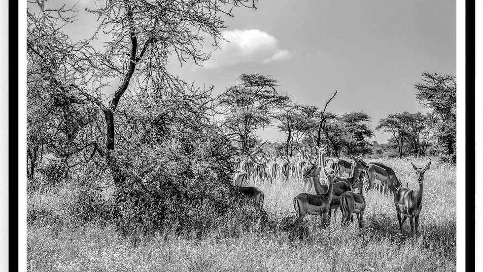Antelopes, Africa, 2018. Fine Art Print. 60 x 80 cm. Edition 10.