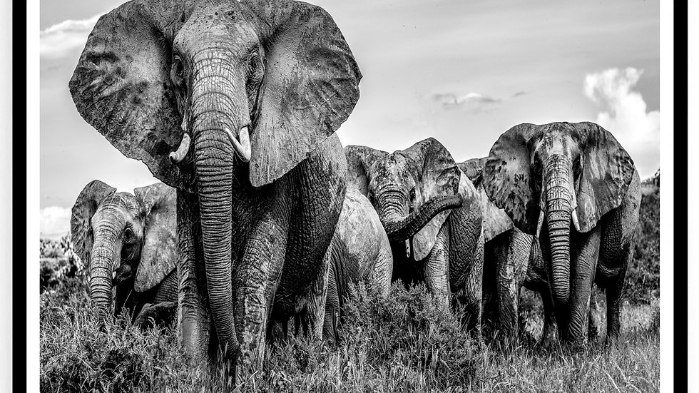 Elephants, Africa, 2018. Fine Art Print. 60 x 80 cm. Edition 10.
