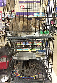 Cats for adoption from Haven of the Ozarks Animal Sanctuary