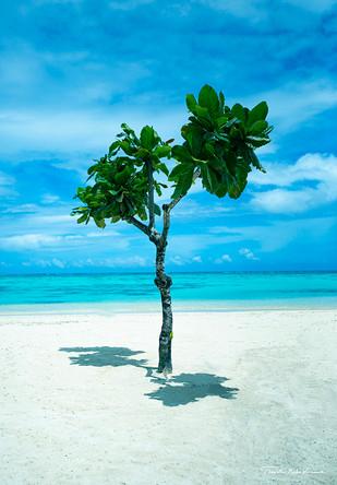 一本の木.jpg