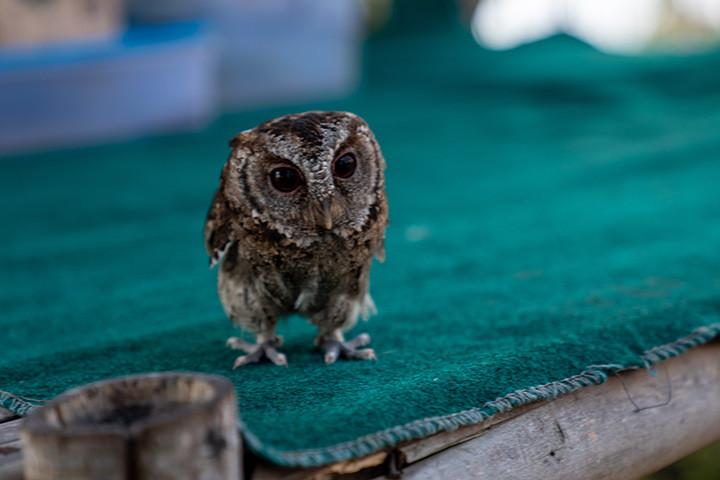 tiny cute owl