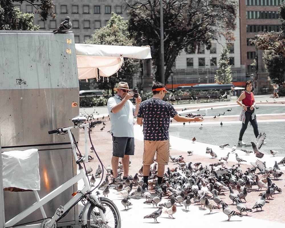 feeding pigeons in barcelona