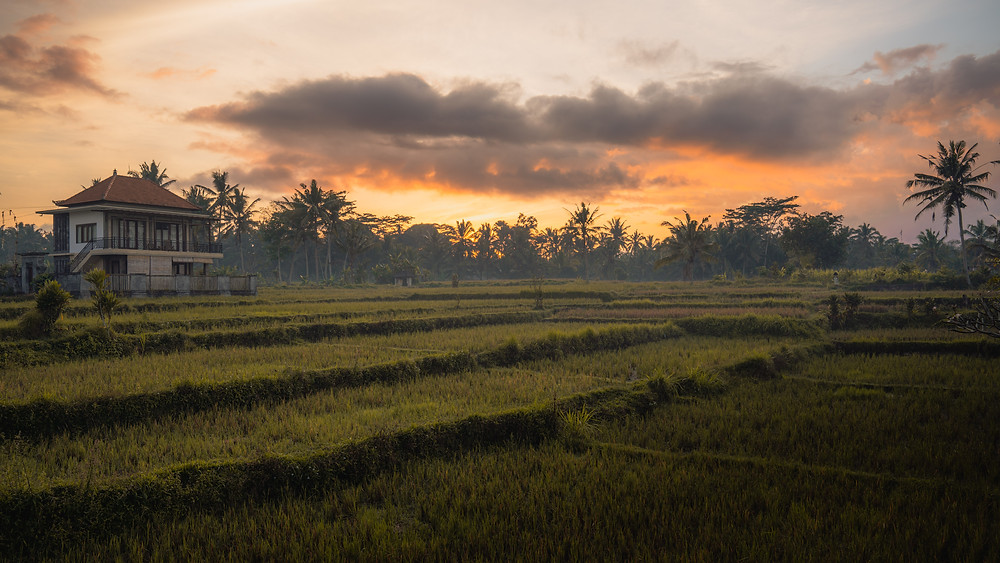Rice Field Sunrise in Bali