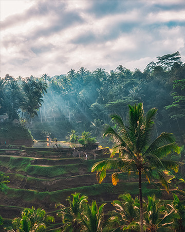 Rays of Light beaming down on Tegallalang Rice Terrace in Bali