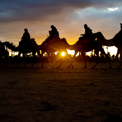 Our sunset camel safari; Baby camels, vertigo and panic attacks