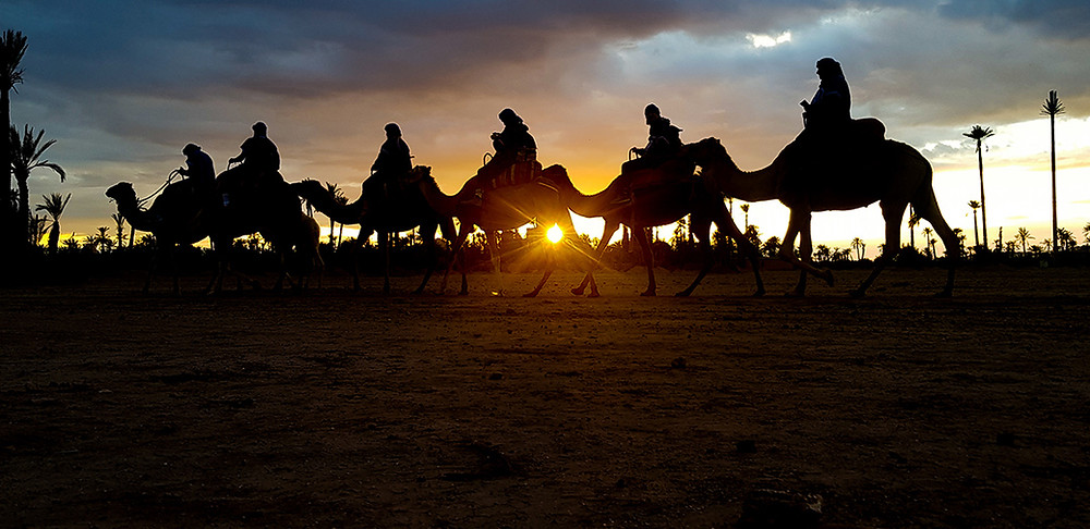 Camel riding silhouettes in the setting sun