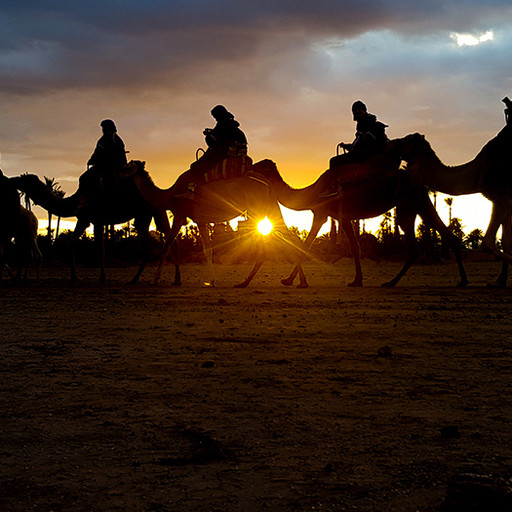 Our sunset camel safari; Baby camels, vertigo and panic attacks